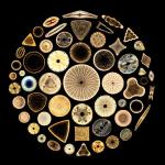 Diatoms in a Circle Magnification: 125x